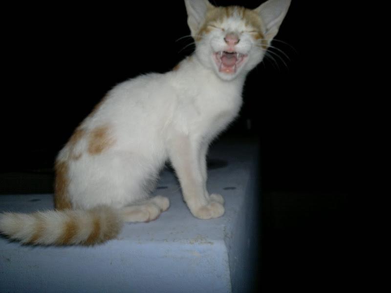 Photo: Cat Roars ... Hi hi hi... It yarns