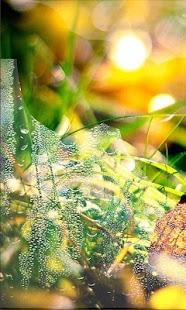 Autumn Rainy Day LWP - náhled