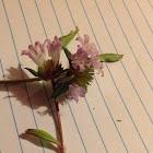 Unknown Spotting ( Purple Flowers )
