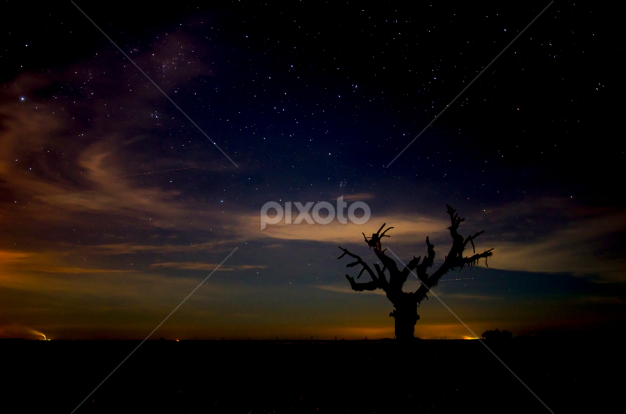 Alone in Dark by KIN WAH WONG - Landscapes Starscapes ( field, tree, stars, paddy, dark, night, scenery, landscapes, alone )