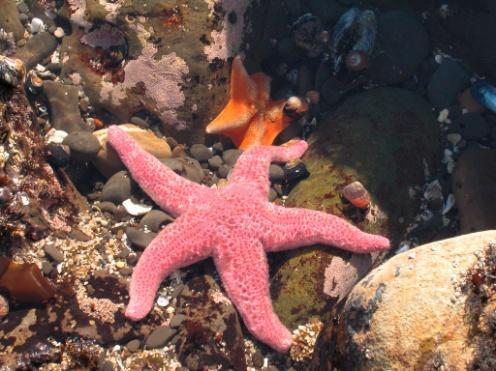 01_sunflower-starfish.jpg