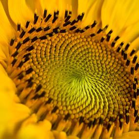 by Gašper Kamenšek - Nature Up Close Flowers - 2011-2013