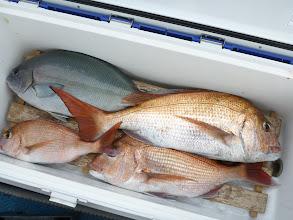 Photo: 釣果です。 オカムラさん、次回・・・ですな。
