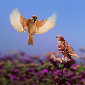 by iD 's - Animals Birds