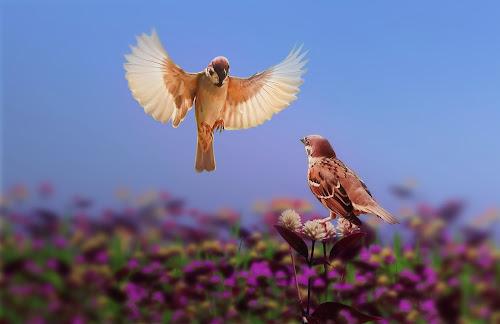 by iD 's - Animals Birds