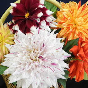 by Wayne Paton - Nature Up Close Flowers - 2011-2013
