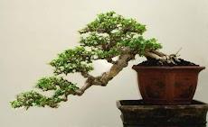 盆栽の木のアイデアのおすすめ画像3