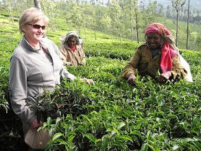 Photo: 7B220949 na plantacji herbaty