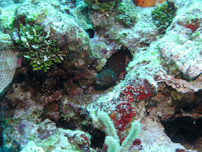 Photo: Golden Moray Eel