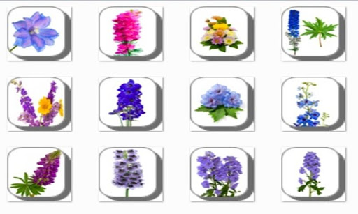 Delphinium Flowers Onet Game