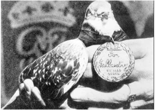 gi-joe-pigeon.jpg