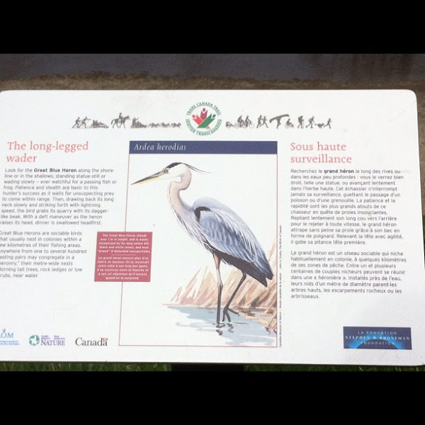 Photo: The long-legged wader, in Maple Ridge area #gplus - via Instagram, http://instagr.am/p/JyvukSpfvt/