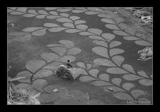 Photo: 'Kelp I' -detail 2012 Fort Bragg, CA