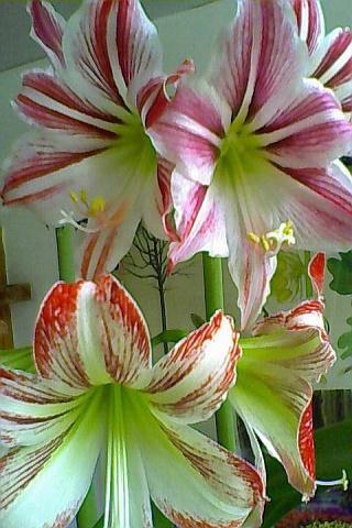 Flowers 777