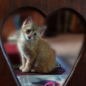 I love you by Vivian Gordon - Animals - Cats Kittens ( vigor, kitten, cat, pet, feline, animal )