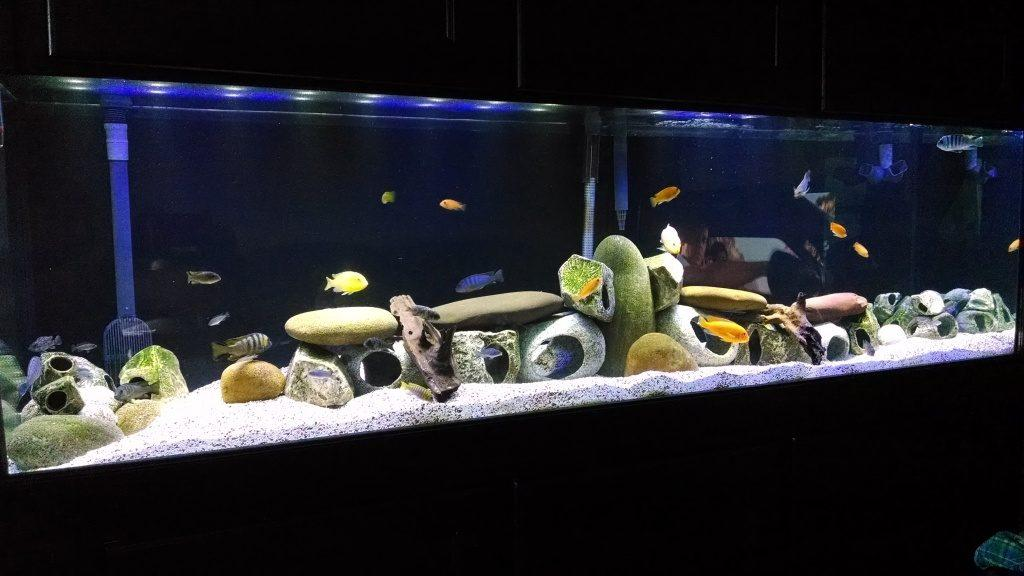 How To Put Together The Perfect Fish Tank For Tropical Fish