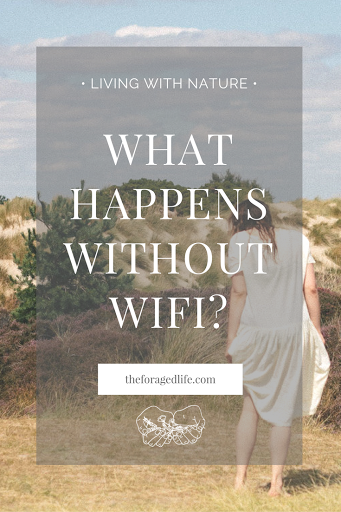 What happens without wifi? | Living without wifi can be a petrifying idea in our 21st century, hyper-connected, world. But living without wifi can result in living more closely with nature and a better, more rich life. Take a look at what it has done for me | Living with Nature by The Foraged Life