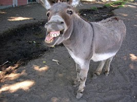 Screenshot of Donkey