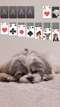 Solitaire Cute Puppies - screenshot