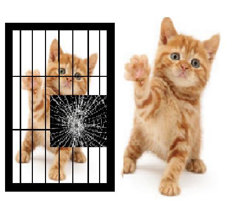 Break Glass Save life cat etc.