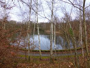 Photo: Un étang dans la forêt de Versailles