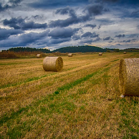 Harvested by Rajarshi Chowdhury - Landscapes Prairies, Meadows & Fields ( field, europe, village, sunset, paddy, agriculture, france, harvest, landscape )