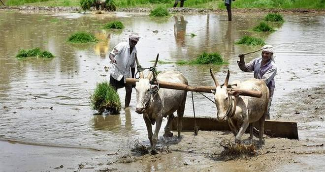 Image result for Policies Biased against Rainfed Agriculture