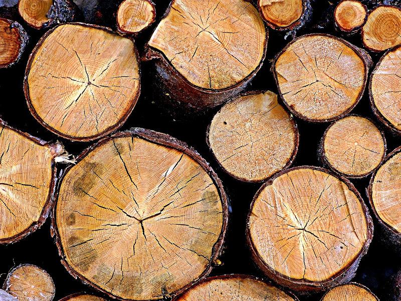 Wood in Winter di Michele M