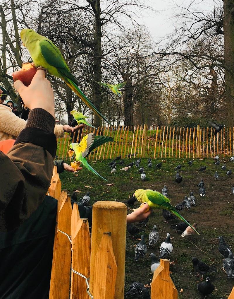 giallo pappagallo di gaia_ciolli