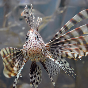 Who are you??? by Hsn Doel - Animals Fish (  )