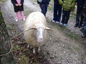 Photo: vuole essere tosata questa pecora
