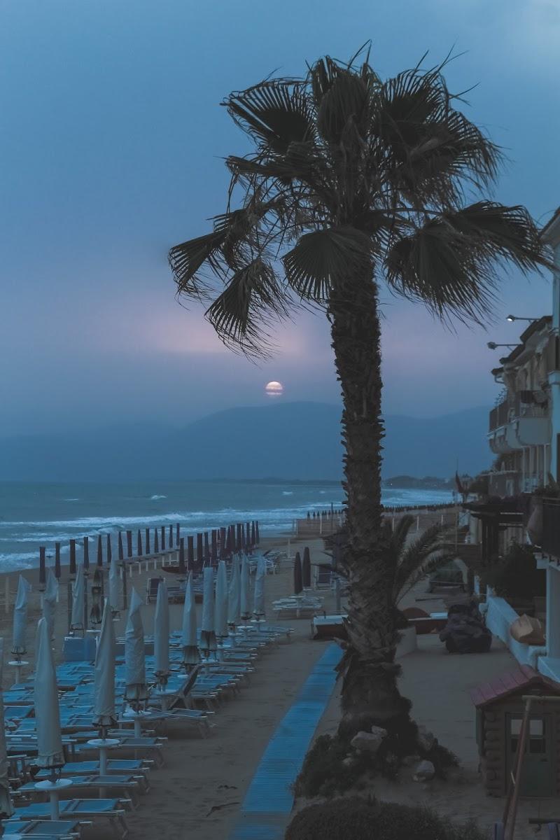 Palm sunset di Gianluca Gerardi
