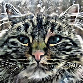 Botsman by Michael Krivoshey - Digital Art Animals ( cats, sony, cat, michael krivoshey, hdr, alpha, effects, a57, cute, portrait, drawing, photoshop )