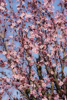Natura in fiore! di Morellato Marco