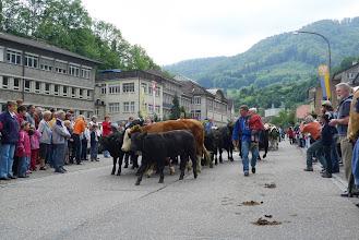 Photo: Was sind das für Tiere am Strassenrand?