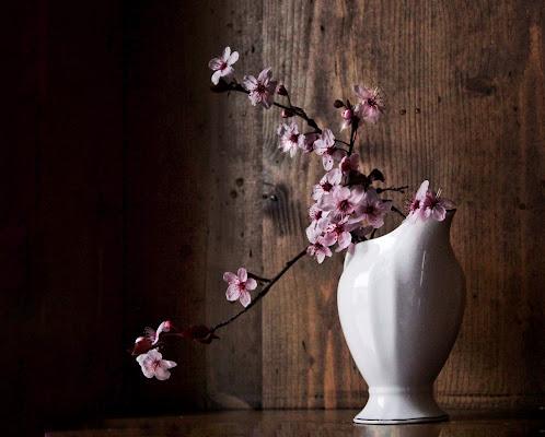 I primi fiori