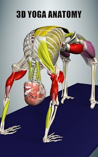 Posture by Muscle and Motion Screenshot