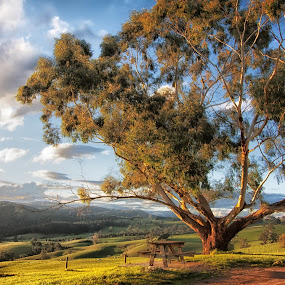 Neerim Outlook by Gary Parnell - Landscapes Prairies, Meadows & Fields ( neerim, victoria )