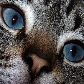 by Marissa Enslin - Animals - Cats Kittens (  )
