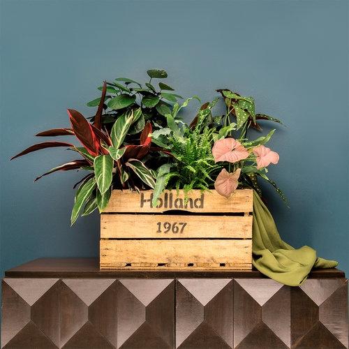 Bekijk hier de Kamerplanten Koraal