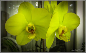 Photo: Orhidee (Orchidaceae)   - din Turda, Calea Victoriei, Nr.5, ap.8 - 2019.05.26