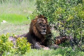Photo: Царь зверей