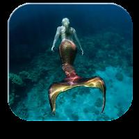 Mermaid Maritime Live