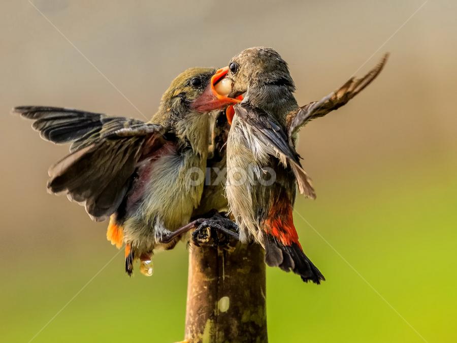 Feed with Love by Husada Loy - Animals Birds