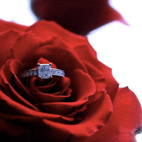 Engagement Ring by Julia Nicely - Wedding Details ( rose, ring, wedding, marriage, engagement )