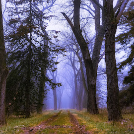Pioneers Park by Mike Hotovy - Nature Up Close Trees & Bushes