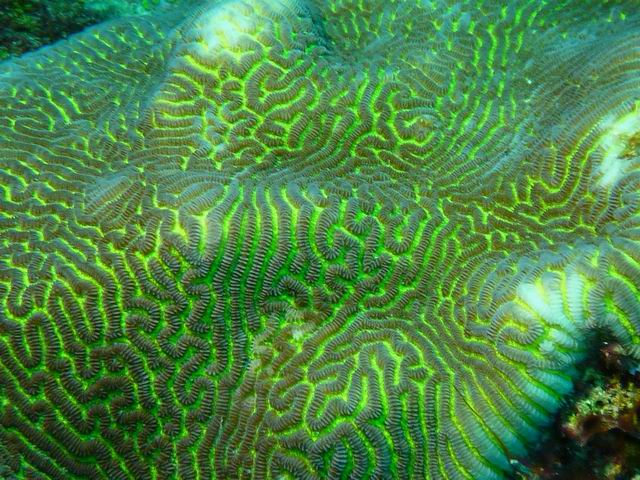 Photo: Corail fluorescent en Nouvelle-Calédonie