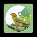 Chama Pássaros icon