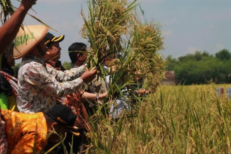 Meteri pertanian kunjungi Ngawi…ini agendanya…