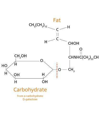 Hydrotec – углевод